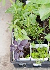 container-garden-seedling-basket-1-of-1